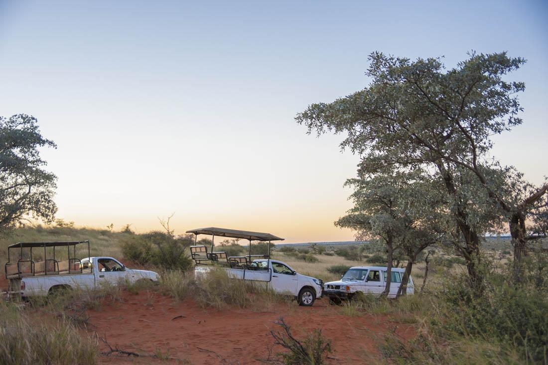 Safari Kalahari Wüste
